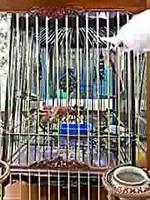 นกหัวจุกเผือก ปล่อยเด็ด_low.mp4