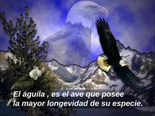 EL AGUILA.pps